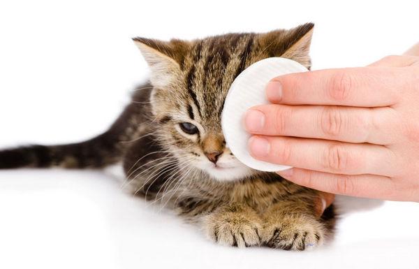 Сыпь у кошек прыщи по всему телу